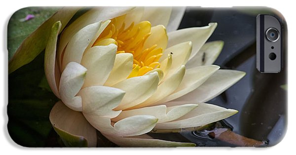 Smithsonian National Zoological Park iPhone Cases - Water Lily iPhone Case by Carol Ailles