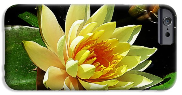 Innocence iPhone Cases - Water Lily iPhone Case by Dawn Gari
