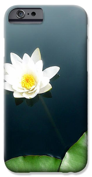 Water Lilly iPhone Cases - Water Lily Study 2 iPhone Case by Ron Regalado