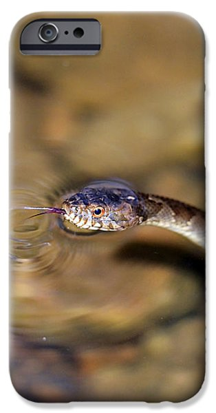 Water Snake iPhone Case by Susan Leggett