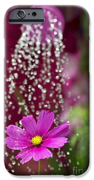 Drops Of Water iPhone Cases - Watering the Cosmos iPhone Case by Tim Gainey
