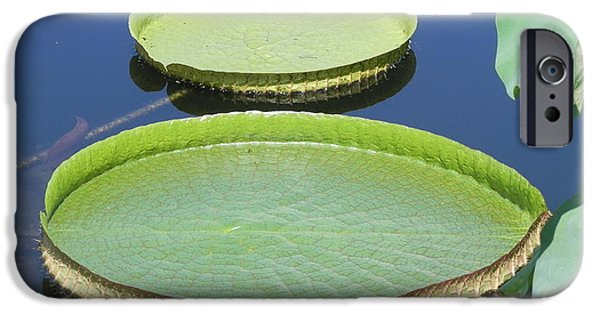 Nature Abstract iPhone Cases - Waterlilie Pads at the NY Botanical Gardens iPhone Case by Chrisann Ellis