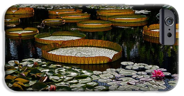 Victoria Cruziana iPhone Cases - Waterlilies All iPhone Case by Byron Varvarigos