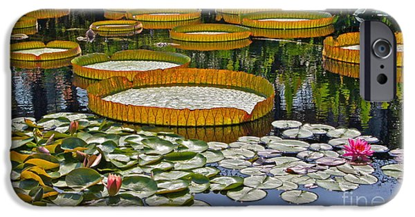Victoria Cruziana iPhone Cases - Waterlilies All -- version 2 iPhone Case by Byron Varvarigos