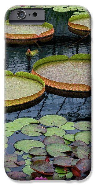 Victoria Cruziana iPhone Cases - Waterlilies and Platters 2 iPhone Case by Byron Varvarigos