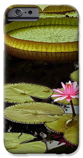 Victoria Cruziana iPhone Cases - Waterlilies And Platters Vertical Romance iPhone Case by Byron Varvarigos