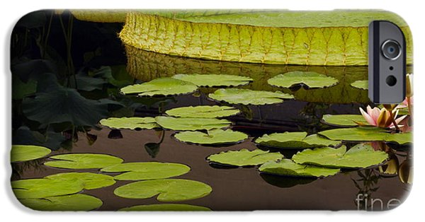 Victoria Cruziana iPhone Cases - Waterlily Charm iPhone Case by Byron Varvarigos