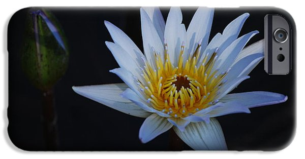 Nymphaea iPhone Cases - Waterlily Dawn Number One iPhone Case by Heather Kirk