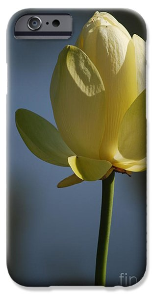 Nymphaea iPhone Cases - Waterlily in Waiting Number Three iPhone Case by Heather Kirk