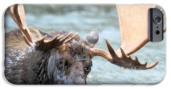 Moose In Water iPhone Cases - Watery Lunch iPhone Case by Adam Jewell