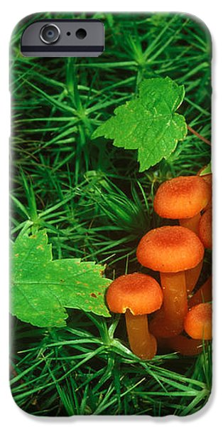 Wax Cap Fungi iPhone Case by Jeff Lepore