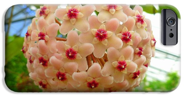 Bonding iPhone Cases - Wax Plant - Hoya Carnosa iPhone Case by Lingfai Leung
