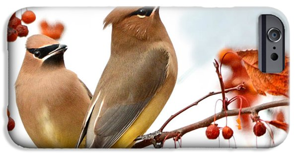 Berry iPhone Cases - When Waxwing Visit iPhone Case by Nava  Thompson