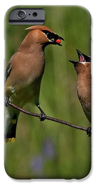 Waxwing Love.. iPhone Case by Nina Stavlund