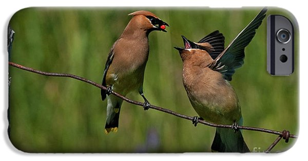 Bonding iPhone Cases - Waxwing Love.. iPhone Case by Nina Stavlund