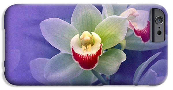 White Orchid iPhone Cases - Waxy White Orchids With Fuchsia Centers iPhone Case by Panoramic Images