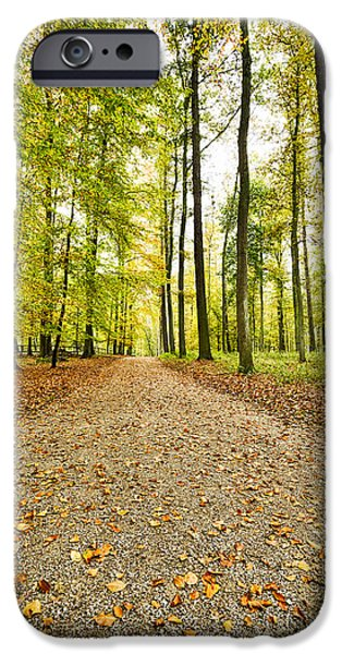 Fog Mist iPhone Cases - Way Through A Forest In Autumn iPhone Case by Armin Staudt