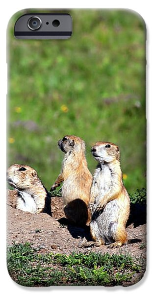 We Are Family iPhone Case by Lana Trussell