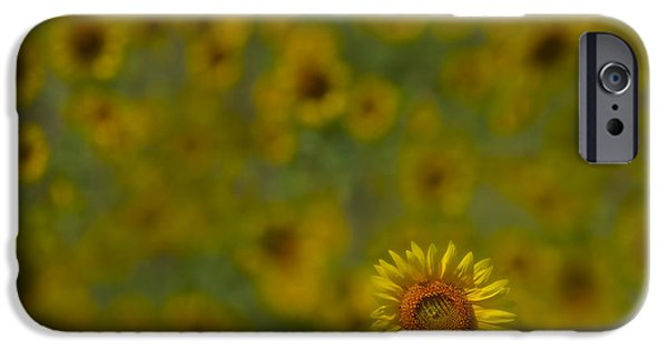 Sunflower iPhone Cases - We Worship The Sun iPhone Case by Susan Candelario