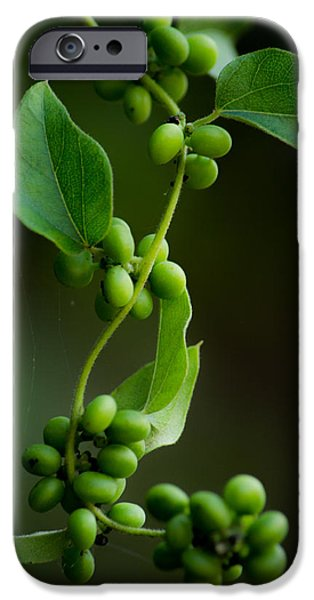Vine Leaves iPhone Cases - Weaving Vines iPhone Case by Shelby  Young