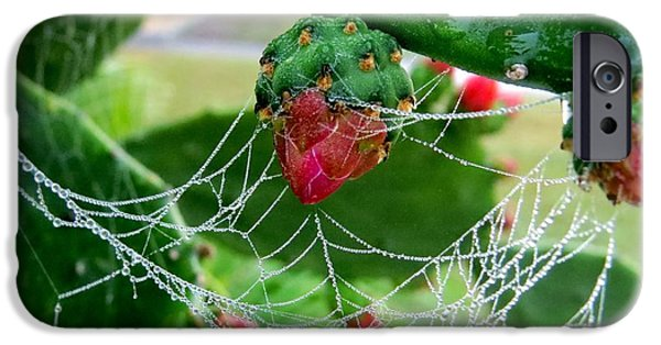 Garden iPhone Cases - Web on the cactus iPhone Case by Zina Stromberg
