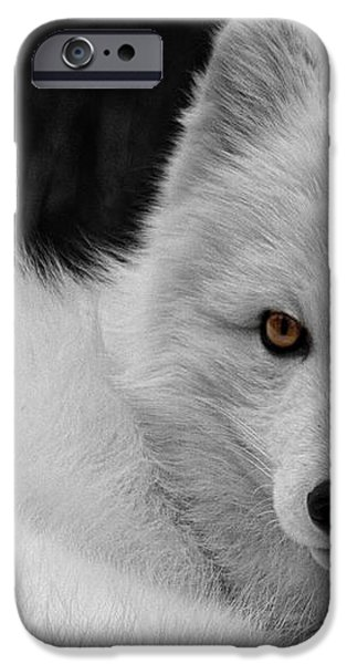 Wee Arctic Hunter D3613 iPhone Case by Wes and Dotty Weber