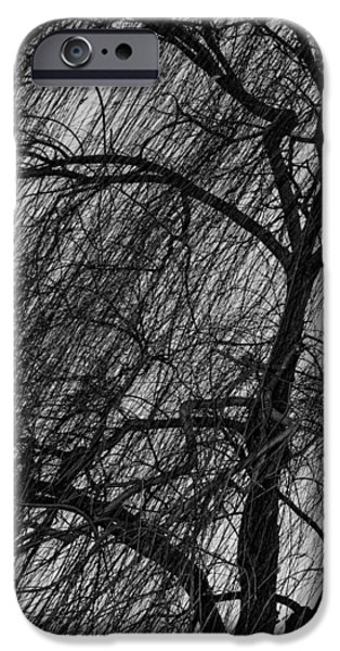 Final Resting Place iPhone Cases - Weeping Willow iPhone Case by Robert Hebert