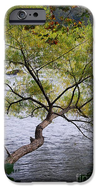 Willow Lake iPhone Cases - Weeping Willow iPhone Case by Skip Willits