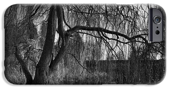 Willow iPhone Cases - Weeping Willow Tree iPhone Case by Ian Barber