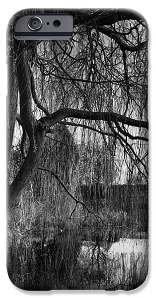 Weeping Willow Tree iPhone Case by Ian Barber