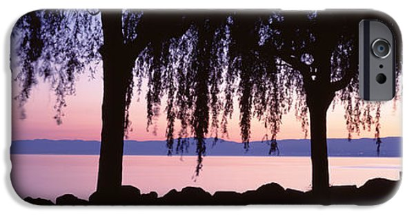 Willow Lake iPhone Cases - Weeping Willows, Lake Geneva, St iPhone Case by Panoramic Images
