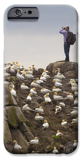 Fauna iPhone Cases - Welcome Explorers iPhone Case by Evelina Kremsdorf