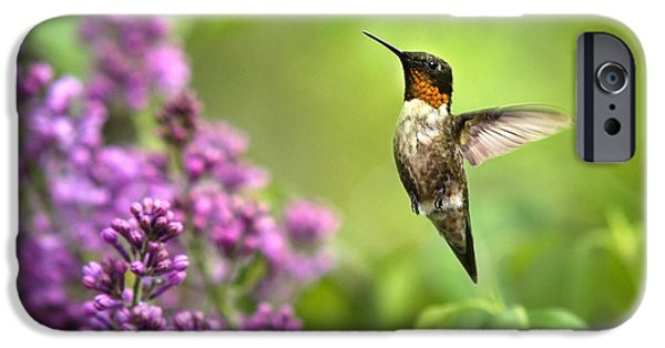 Archilochus Colubris iPhone Cases - Welcome Home Hummingbird iPhone Case by Christina Rollo