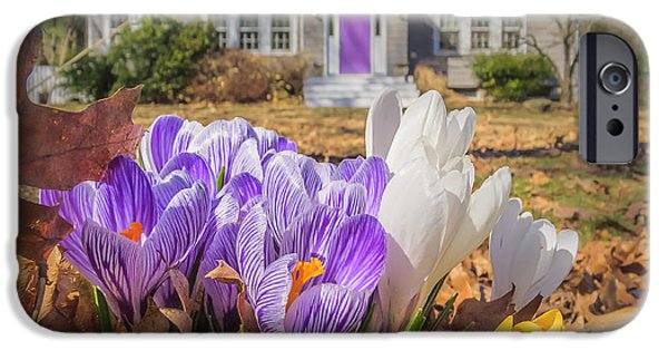 Concord Massachusetts iPhone Cases - Welcome mat of Spring crocuses iPhone Case by Sylvia J Zarco