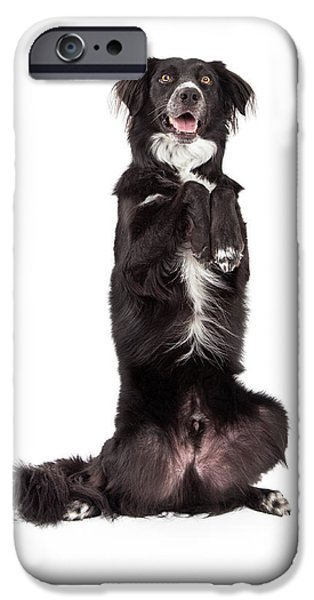 Animals Photographs iPhone Cases - Well Trained Border Collie Mix Breed Dog Begging iPhone Case by Susan  Schmitz