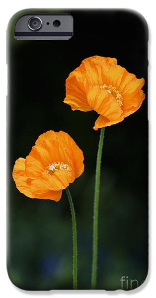 Anther iPhone Cases - Welsh Poppy Flowers iPhone Case by Tim Gainey