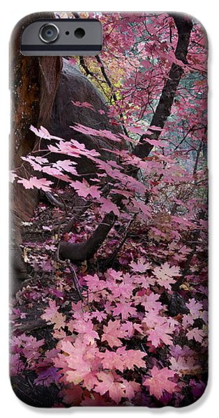 Oak Creek iPhone Cases - West Fork Fall Colors iPhone Case by Dave Dilli