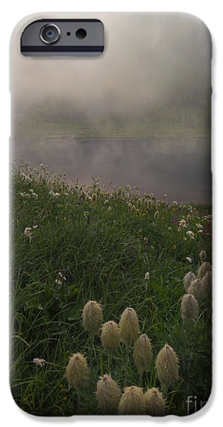 Mist iPhone Cases - Western Anenome Dawn iPhone Case by Mike  Dawson