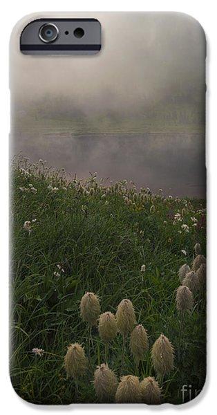 Fog Mist iPhone Cases - Western Anenome Dawn iPhone Case by Mike  Dawson
