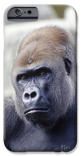 Gorilla iPhone Cases - Western Lowland Gorilla iPhone Case by Gregory G. Dimijian