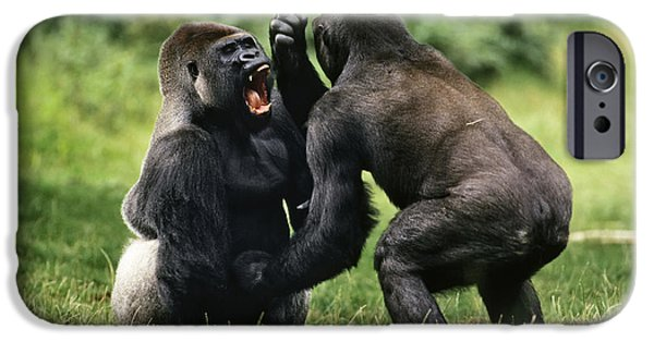 Gorilla iPhone Cases - Western Lowland Gorilla Males Fighting iPhone Case by Konrad Wothe