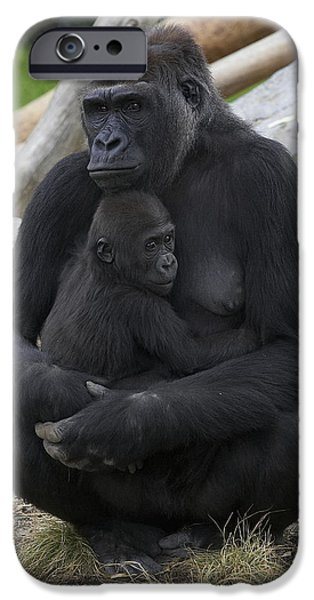Gorilla iPhone Cases - Western Lowland Gorilla Mother And Baby iPhone Case by San Diego Zoo