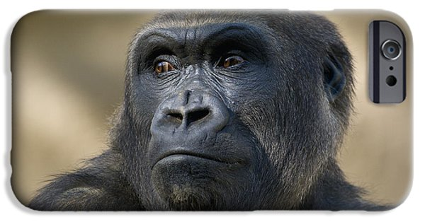 Gorilla iPhone Cases - Western Lowland Gorilla Portrait iPhone Case by San Diego Zoo