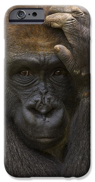 Gorilla iPhone Cases - Western Lowland Gorilla With Hand iPhone Case by San Diego Zoo