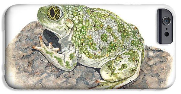 Biology Paintings iPhone Cases - Western spadefoot iPhone Case by Cindy Hitchcock