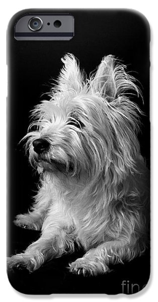 Catherine White Photographs iPhone Cases - Westie iPhone Case by Catherine Reusch  Daley