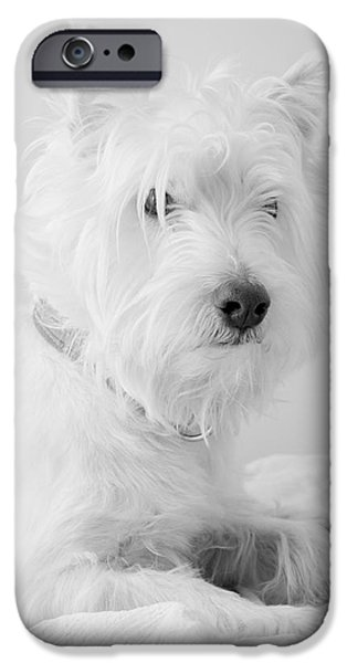 Black Dog iPhone Cases - Westie Dog in Black and White iPhone Case by Edward Fielding