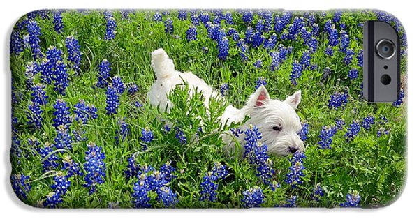 Westie Digital iPhone Cases - Westie in a field of Blue iPhone Case by Carrie OBrien Sibley