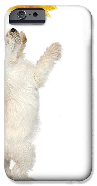 Westie Puppy and Sunflower iPhone Case by Natalie Kinnear