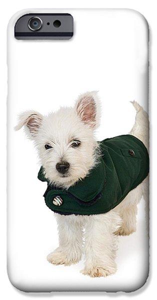 Westie Puppy in a Coat iPhone Case by Natalie Kinnear